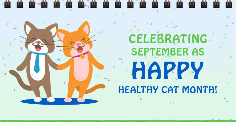 Celebrating September As Happy, Healthy Cat Month!