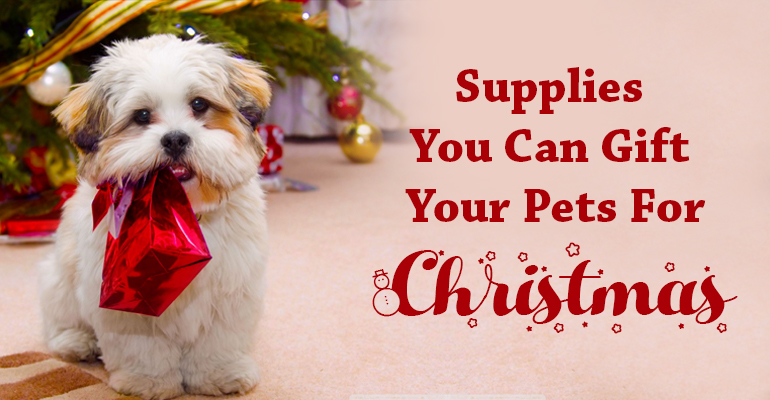 Supplies You Can Gift Your Pets For Christmas