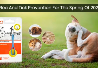 Flea And Tick Prevention For The Spring